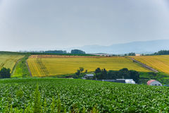 Area di agricoltura di BIei Fotografia Stock Libera da Diritti