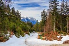 Area di conservazione del lago Alpsee con le canne e l'attività Fotografia Stock Libera da Diritti