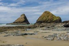 Area di incastramento degli uccelli acquatici sulla costa Fotografie Stock Libere da Diritti