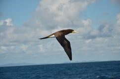 Area di Karibik dell'uccello acquatico fotografia stock libera da diritti