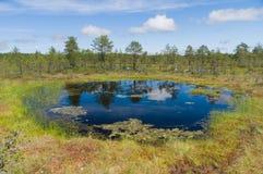 Area di Muskeg, riflessione su acqua Fotografie Stock Libere da Diritti