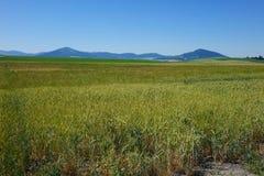 Area di Palouse - Idaho del Nord Immagini Stock