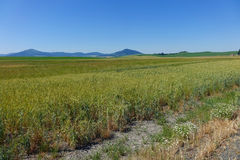Area di Palouse - Idaho del Nord Immagine Stock