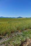 Area di Palouse - Idaho del Nord Fotografia Stock Libera da Diritti