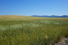 Area di Palouse - Idaho del Nord Fotografia Stock