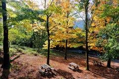 Area di picnic della foresta Immagini Stock
