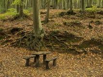 Area di picnic nella foresta fotografia stock libera da diritti
