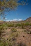 Area di regione selvaggia di superstizione Fotografia Stock Libera da Diritti