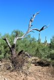 Area di regione selvaggia di superstizione, Maricopa, contea, Arizona, Stati Uniti Immagine Stock Libera da Diritti