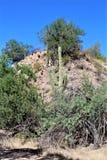 Area di regione selvaggia di superstizione, Maricopa, contea, Arizona, Stati Uniti Fotografia Stock