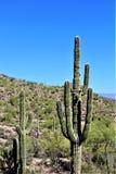 Area di regione selvaggia di superstizione, Maricopa, contea, Arizona, Stati Uniti Immagine Stock