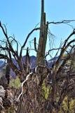 Area di regione selvaggia di superstizione, Maricopa, contea, Arizona, Stati Uniti Immagini Stock