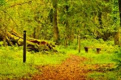 Area di rilassamento in foresta Fotografia Stock Libera da Diritti