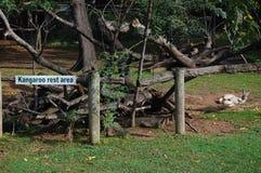 Area di riposo del canguro Immagini Stock Libere da Diritti