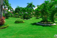 Area Dominican Republic hotel. Area hotel dominican republic green lawn with palm tree stock images