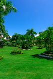Area Dominican Republic hotel. Area hotel dominican republic green lawn with palm tree royalty free stock photography
