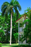 Area Dominican Republic hotel. Area hotel dominican republic green lawn with palm tree stock photo