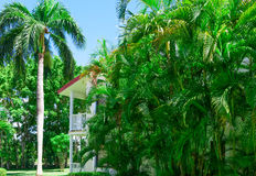 Area Dominican Republic hotel. Area hotel dominican republic green lawn with palm tree royalty free stock images