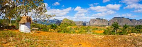 Area famosa del tabacco del terreno coltivabile di Cuba, Valley de Vinales, Cuba Immagini Stock Libere da Diritti