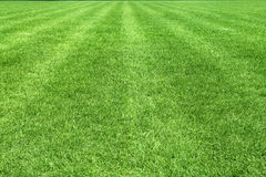 The area of a football field with natural grass Stock Photography