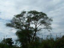 Area-foresta ed alberi di Riserva-delta di Rusizi Naturel fotografia stock libera da diritti