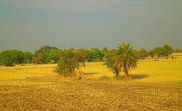 Area intorno a Nagpur, India Colline pedemontana asciutte con i giardini degli agricoltori dei frutteti Fotografie Stock