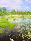 Area naturale dello stato della palude di Volo Fotografia Stock
