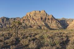Area nazionale di conservazione del canyon rosso della roccia nel Nevada Immagine Stock