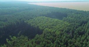 Area panoramica di crescita di legno per taglio ulteriore archivi video