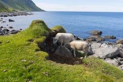 Area protetta del parco in Eggun in Norvegia Fotografie Stock