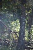 Area ripulita dalle erbacce Immagini Stock