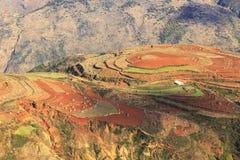 Area rossa della terra nel Yunnan Fotografia Stock Libera da Diritti