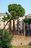 Area Sacra ruins Royalty Free Stock Photography