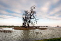 Area sommersa del ploder nei Paesi Bassi Fotografia Stock