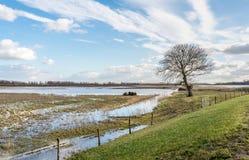Area sommersa della natura nei Paesi Bassi Fotografie Stock Libere da Diritti