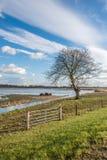Area sommersa della natura nei Paesi Bassi Fotografia Stock