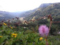 Area Sri Lanka di Babaragala fotografie stock