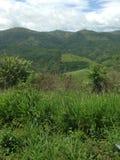 Area tropicale peruviana del paesaggio Fotografia Stock Libera da Diritti