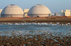 Area umida con i egrets fotografie stock libere da diritti