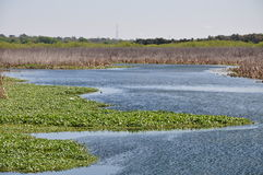 Area umida della Florida Fotografie Stock
