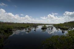 Area umida della mangrovia Fotografie Stock
