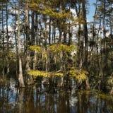 Area umida nei terreni paludosi della Florida. Immagini Stock Libere da Diritti