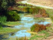 Area umida nella zona della baia Immagini Stock Libere da Diritti