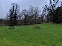 Area verde Benched in uno schiarimento con gli alberi reali in a sud-est del Regno Unito fotografie stock