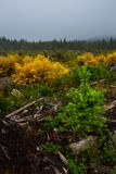 Regrowth of a logged area royalty free stock image
