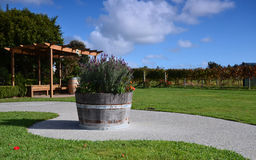 The area wineries Estate Winery Soljans. Landscape. Auckland. Stock Photos