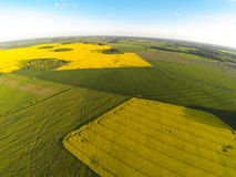 Areal view of blooming raps field. S in sunny summer day Royalty Free Stock Photos