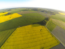 Areal view of blooming raps field. S in sunny summer day Royalty Free Stock Images