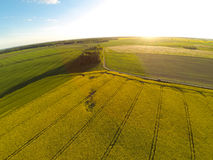 Areal view of blooming raps field Stock Image