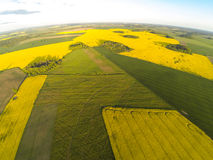 Areal view of blooming raps field Royalty Free Stock Image